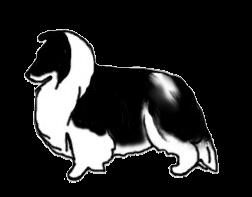 shetland-white-factor